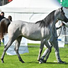 Expo-Prado-2020-Dia-4 (13)