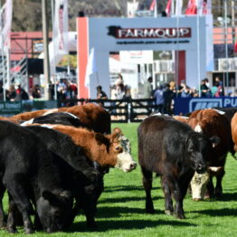 Expo-Prado-2020-Dia-4 (71)