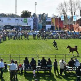 Expo-Prado-2020-Dia-5 (110)