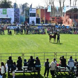 Expo-Prado-2020-Dia-5 (95)