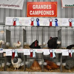 Expo Prado 2020 - Dia 6 (32)