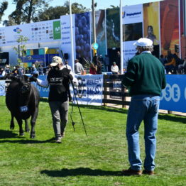 Expo Prado 2020 - Dia 7 (2)