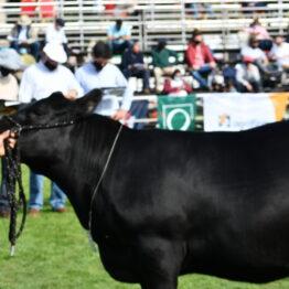 Expo Prado 2020 - Dia 7 (97)