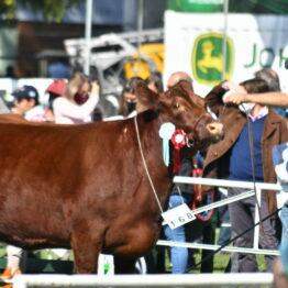 Expo Prado 2020 - Dia 8 (39)