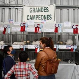 Dia 10 - Expo Prado 2021 (22)