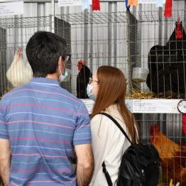 Dia 10 - Expo Prado 2021 (24)