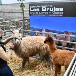 Dia 2 - Expo Prado 2021 (17)
