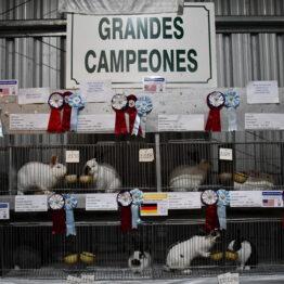 Dia 2 - Expo Prado 2021 (266)