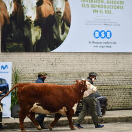 Dia 4 - Expo Prado 2021 (58)