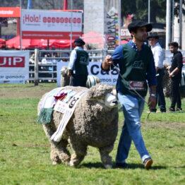 Dia 9 - Expo Prado 2021 (135)