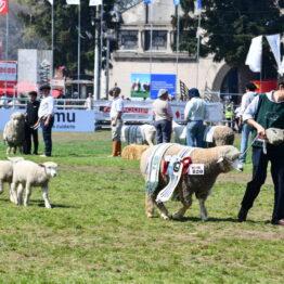Dia 9 - Expo Prado 2021 (136)