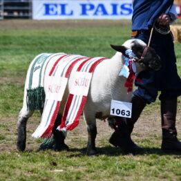 Dia 9 - Expo Prado 2021 (172)