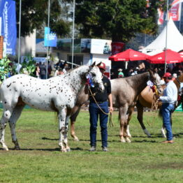 Dia 9 - Expo Prado 2021 (68)